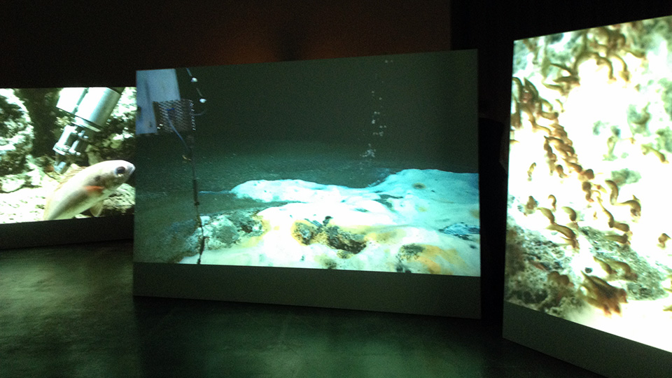 Armin Links stages the underwater footage on several screens. Photo: MARUM - Center for Marine Environmental Sciences