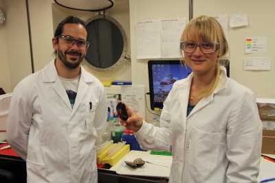 Miguel Ángel González Porras and Merle Ücker from Max Planck Institute for Marine Microbiology in Bremen with two of the Bathymodiolus mussels in the lab. Photo: C. Kleint, Jacobs University