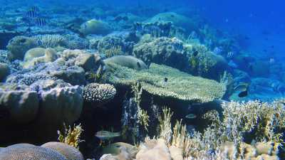 Coral reefs, like this one in the Red Sea, are the focus of the new DFG Priority Programme