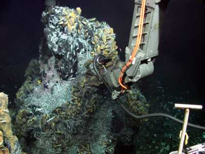 Picture taken by ROV Jason 2 of WHOI, cruise MSM 04/3, Chieft Scientist C. Borowski/Max Planck Institute for Marine Microbiology